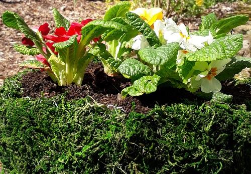DIY – Blumenschale mit Moos